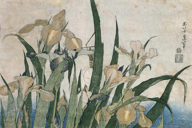 Katsushika Hokusai, Iris Flowers and Grasshopper, 1830, colour woodblock print, 9.75 x 14.25 cm, Minneapolis Institute of Arts (Photo: 74.1.212, Minneapolis Institute of Arts)