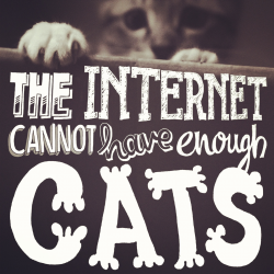 Illustype 029 — The internet cannot have enough cats