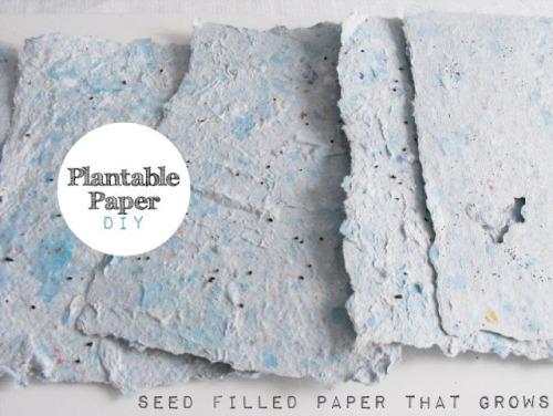 Diy plantable paper.   Via- Kanelstrand  One of my personal favorites.  :)