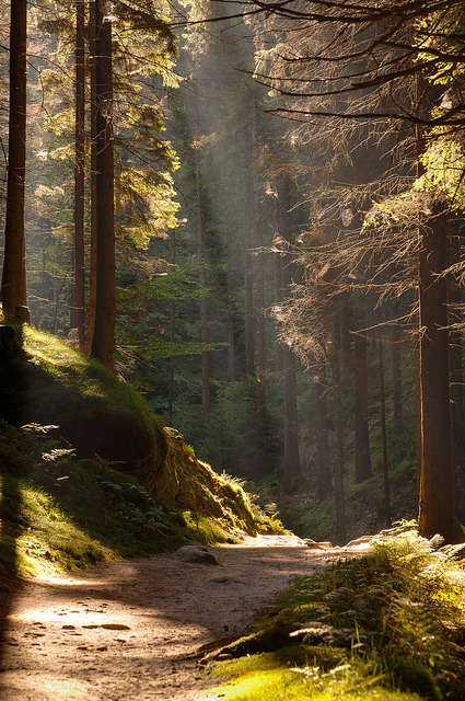 bleiz-harman:  autumn forest and the sun (by  aspheric.lens)