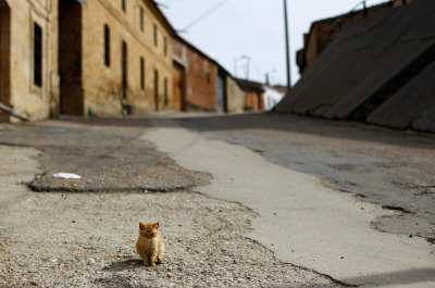 atlanticinfocus:  From A World Without People, one of 41 photos. A cat sits in a deserted street in Peleas de Abajo, in northwestern Spain, on March 8, 2012. Decades of overspending and accumulated interest on unpaid debt has put Peleas de Abajo 4.6 million euros ($6 million) in the red and the mayor claims it is now the most indebted town in Spain. The town's debt per inhabitant is nearly 20,000 euros for every resident. (Reuters/Susana Vera)
