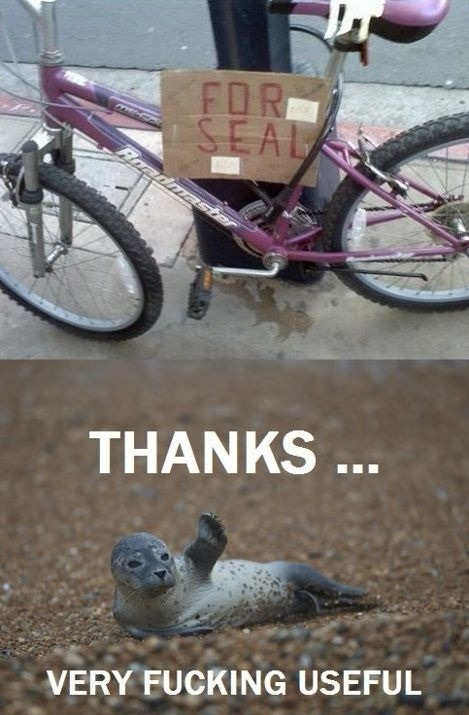 randomfunnyimages:  For Seal.