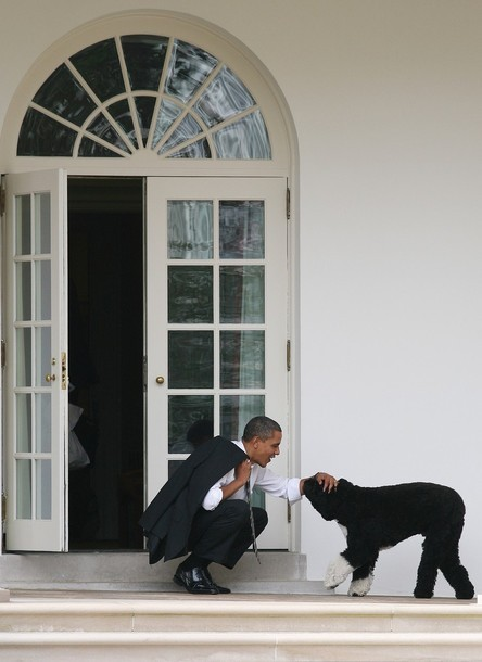 obamafamily:  WASHINGTON - MARCH 15: U.S. President Barack Obama pets his dog Bo outside the Oval Office of the White House March 15, 2012 in Washington, DC. (via Photo from Getty Images)