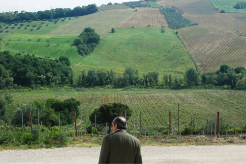 Mr. Sorricchio and his vineyards. We're pouring his Montepulciano d'Abruzzo by the glass.