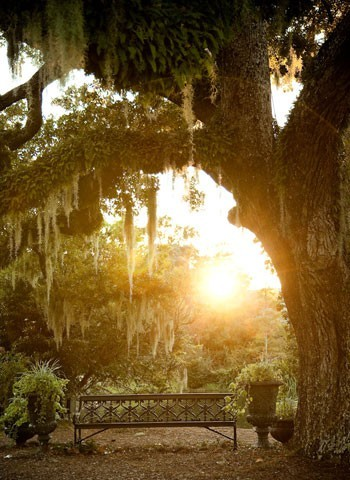 thegirlinthepearls:  Spanish moss in Savannah
