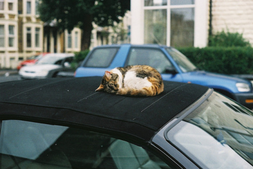 0ut-fitted:  little pussy cat asleep on a bmw's soft top in west end morecambe by rosienewton on Flickr.