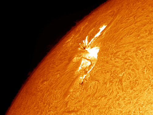 ikenbot:  Sunspot 1429 by Randy Shivak Sunspot group 1429 with large solar flare in progress. Taken with Daystar Quantum PE .5 Angstrom filter.