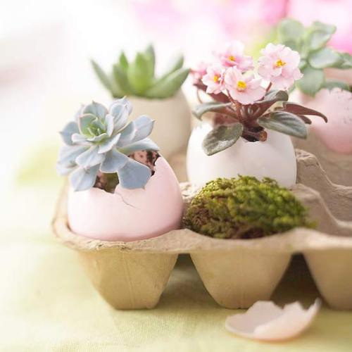 "unconsumption:  For Easter decor, why not make egg planters? After Easter, the plants — eggs and all — can be planted in soil.  How-to:  — Hold an extra-large or jumbo egg on its side. Tap the pointed end firmly with a table knife to just break through the shell; turn it slightly and tap again to remove the ""cap."" [Reserve the contents to cook with] and rinse the shell. — Create a drainage hole by carefully pushing the point of a small knife through the bottom of the shell. — Gently remove about half the soil from around the roots of a small plant. Ease the roots and remaining soil into the shell; add a small amount of soil to cover the roots.  (via Pretty Ways to Decorate with Easter Eggs for Easter from Better Homes and Gardens)"