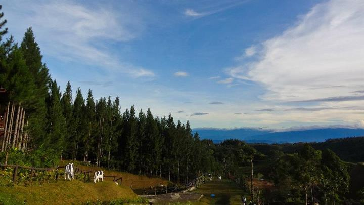 "Day 3: Bukidnon (Dahilayan Forest Park + Dahilayan Adventure Park + Pineappling) * Oh my god, this post is ridiculously delayed, really. The following events transpired last January 21, 2012. It is already March 19, 2012. Whaddup. Photos c/o Andrew Valencia and/or Jhan the guide.   01.19.12-01.23.12  Our CDO trip was jampacked with adventure (see day 1 and day 2 here), and it's kind of hard to pick which activity/adventure I loved best because they were all fun in their own right. But the place I loved the most in our CDO-Bukidnon-Camiguin-Iligan trip was undoubtedly Bukidnon.    I don't know, blame it on Karlo and his Baguio roots perhaps that I've become a mountain-loving person (I always used to vote in favor of the beach), but Bukidnon was just… *sigh*. I imagine that maybe that's what Baguio might have been like 20-30 years ago: pine tree-lined, nippy aired, quiet.    We actually got to Bukidnon late afternoon of Day 2. And we stopped for the best pineapple I have ever tasted in my life before getting to the Dahilayan area. And they had this super awesome cutting mechanism that creates perfect slices of pineapple and leaves some sweet pineapple juice at the bottom of the fruit. I do not have pictures of the perfect slices or of us drinking from the fruit, but I have this:     Haha. I want that pineapple slicer.    Anyway, we spent the night at Dahilayan Forest Park, which we were able to avail promo rates for despite being walk-ins (we seemed to be the only people there that night). Forest Park was a ""splurge"" for our group at ~P600/person for the night (in their Deluxe room) because the room and facilities were nicer and the sunrise view promisingly more epic than it would have been at Cowboy Grill, which was only a few steps away, but also highly recommended. I forget how much their rates were exactly, but I remember thinking that we had to spend an extra P200 (more or less) to stay at Forest Park vs. Cowboy Grill.    It was nice just hanging around and chatting that night after all the physical activity and adrenaline pumping in the last two days. So we kind of just pigged out that night with pizza and chips we brought, plus beer or hot chocolate. Yum. Perfect for cool mountain air. Ah.    And then we woke up early the next day, around 7-ish.And this was the first thing I did:     I apologize for my face (sup, biyatch?), but yeah, I was sleepy (and apparently, so was Karlo, based on this picture). I hadn't changed out of my PJ's, nor did I have breakfast yet, which is probably not recommended before taking on the Zorbit anyway. And well, we Zorbived (lol) but yeah, it might have been useful if the Zorbit staff told us it would be better if similar weighing people were in the Zorbit together so that the rolling would be smoother. But oh well, this led to our initial whoaaaa's turning into owwwww's after sort of feeling our heads hit the bottom of the Zorbit hard. That definitely woke us up. :P   After that, zipline! But before getting to the longest zipline, a rollercoaster ride on this baby first. Mucho fun. :D       Buh-bye, world. Peace out.    The zipline is so long, you could get bored while flying. Haha. But it's something I'm glad to get off my unwritten bucket list.   After all that excitement, we head to lunch at the Del Monte plantation or wherever it is that they serve their steaks. I'm not a steak person so I wouldn't really go there for the steak. And my steak friends said it was just okay, so I guess either way, I wouldn't really recommend going there for the steak. But ooh la la, they had bottomless pineapple juice their for P20. That, I would go for.   Then we stopped on the side of the road before leaving Bukidnon for some obligatory jump shots in the pineapple field. :D    Ah, how I love pineapple. And how I loved Bukidnon. :) But yeah, at this point, we were also rushing to the ferry to Camiguin, which I will write about soon enough. For now, you can watch this video by  @avalaunched a.k.a. Ardent Videos for a quick summary of our adventure-filled trip. :D   And if you want a helpful guide/driver/photographer in one, get in touch with Jhan at (0927) 407 8359 , and tell him you found out about him through my blog. :P   Pine & zipline,  Jen   Twitter 
