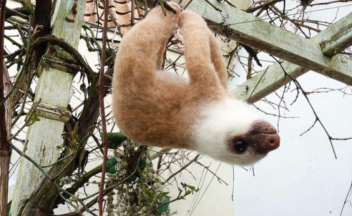 woyo:  Sloth baby by helenpriem on Flickr.