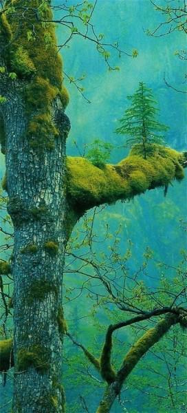photography tree nature travel adventure Explore wanderlust