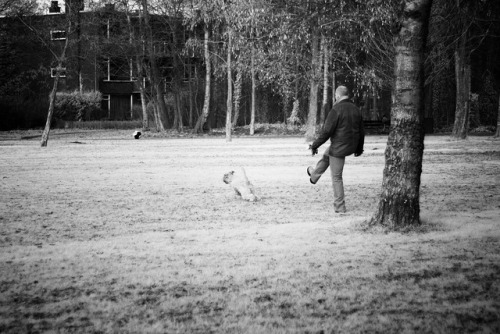 He kicked the ball, not the dog! on Flickr.