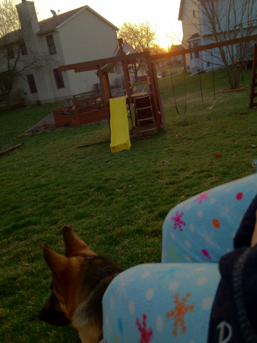 I find myself backyard sitting as the sun comes up happily in my pajamas stick chewing dog at my feet we were also out at 5:00a.m.  when the sky was still full dark and the crescent moon  smiled a crooked grin the birds are serenading us singing the song of spring while the daffodils bloom swaying to the birdsong  and the gentlest of breeze mmmmmmm, Saturday so glad you're here