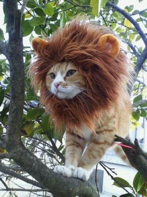 riffraffstreetratt:  lunaticpark:  the lion king!  Yes…just…yes.   REMY!!! COME QUICK!!!