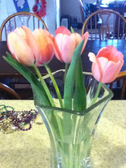 My tulips bloomed!!!!!!!!!