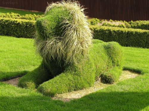 Topiary - The art of shaping shrubs!