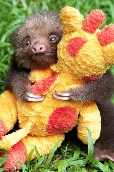 sleepybeaver:  Baby sloth hugs stuffed animal