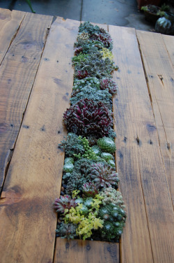 neohippiemama:  More succulent love.