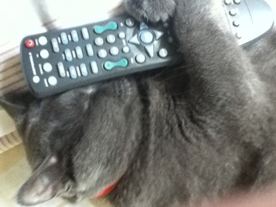 Grizzly> Nothing is better that falling asleep with the TV on. Prrrrr *whiskers Mino> Instead of a security blanket, he hugs the remote.