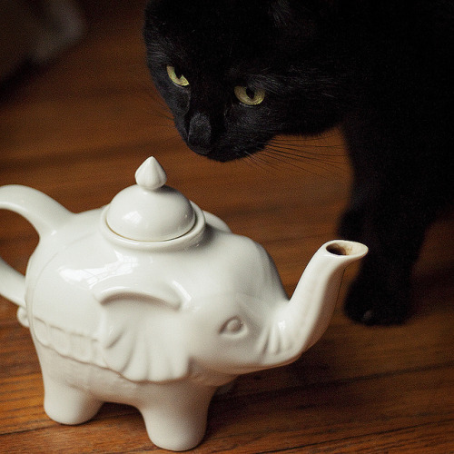 booksandtea:  (22/365) chai and henrietta. by phase VIII on Flickr.