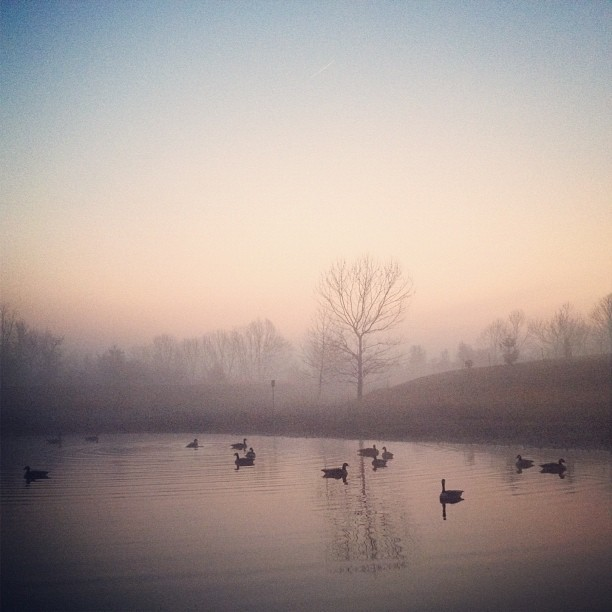 artchipel:  Andrew Gallo | on Tumblr - Early Morn Shoot Taken with instagram