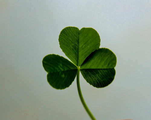 NC Shamrock (by Dora Meulman) Happy St. Patrick's Day to all my nurse followers ^_^