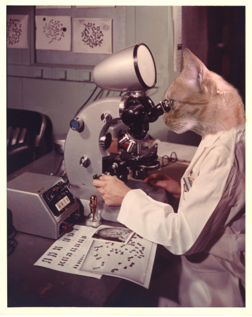 If you aren't following cat scientists you need to be.