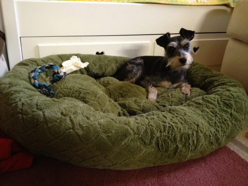 03-17-12 - Bought Prince a brand new bed. He L O V E S it!! Hooray! :)