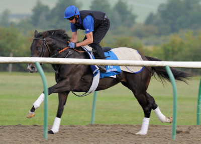 Godolphin's Mendip takes a swing around the training track in preparation for the 2012 Dubai World Cup