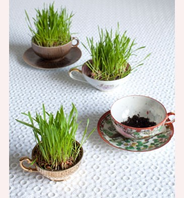 tutorial: wheatgrass teacup planters via Holidash
