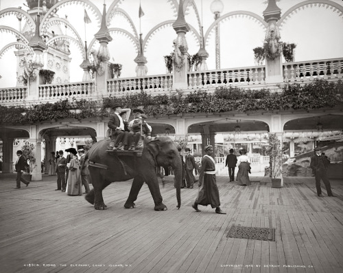 tweed-eyes:  Elephant riding at Coney Island. Brooklyn, New York, 1905.