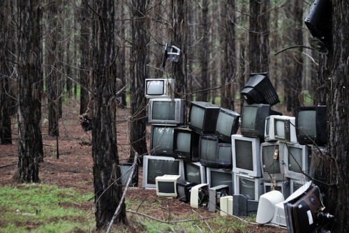 Tv's in a forest by jwhish on Flickr.