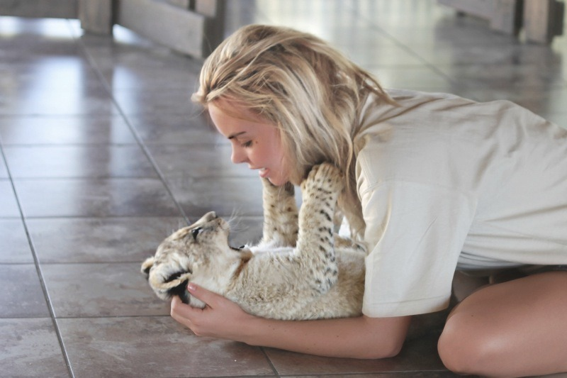 ins-pired:  cuttte  I WANT A BABY TIGER
