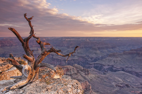 Grand Canyon Sunrise by d-day buff (too busy for new photos now) on Flickr.