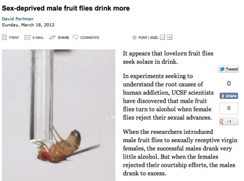 Fruit flies: Just like us.