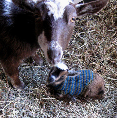 wellaubydamned:  this  OMG it's a kid in a sweater.