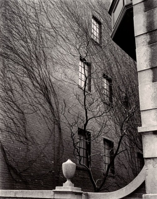 Brett Weston (American, 1911-1993)Building, Ivy, Tree, Sutton Place, New York1945 Gelatin silver print
