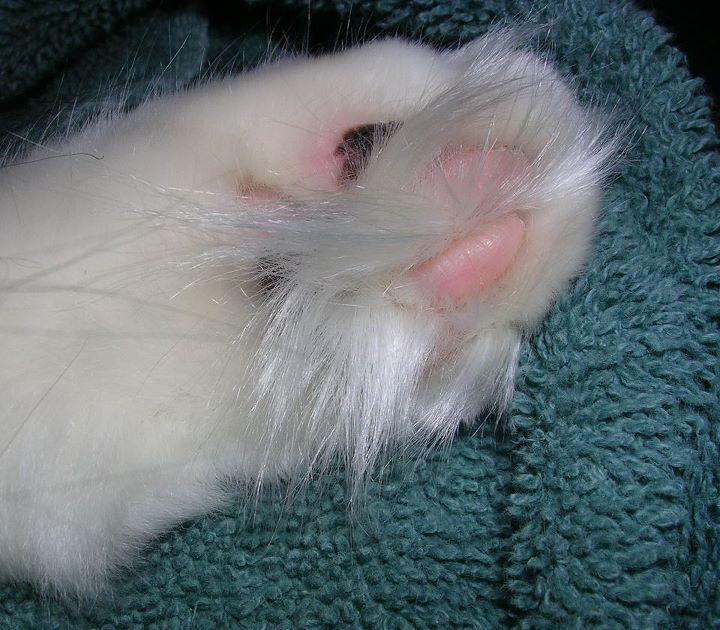 Seriously fuzzy toeses. Photo via CatLadyLand