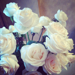 mildrose:  white roses are so stunning