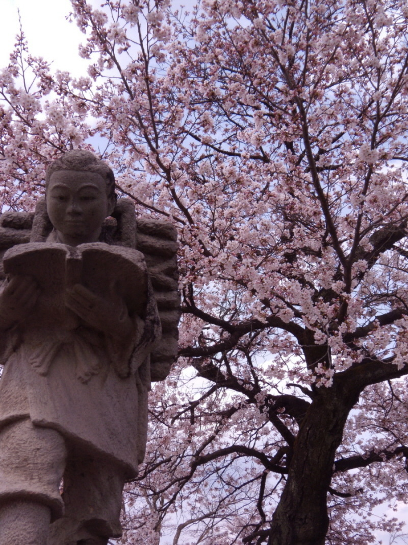 bookporn:  sakura and statue by ~moldypotatoes