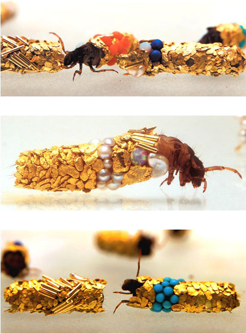 geneticist:  Caddis fly larvae protect their developing bodies by building themselves sheaths of silk and incorporating substances found in their habitats. Artist Hubert Duprate placed a group of Caddis fly larvae into a tank with gold and other precious substances for the larvae to spin into their sheaths.