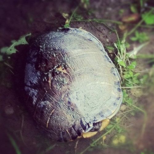 Also turtle! #swag #instagold  (Taken with instagram)