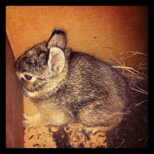 #bunnyrescue (Taken with instagram)
