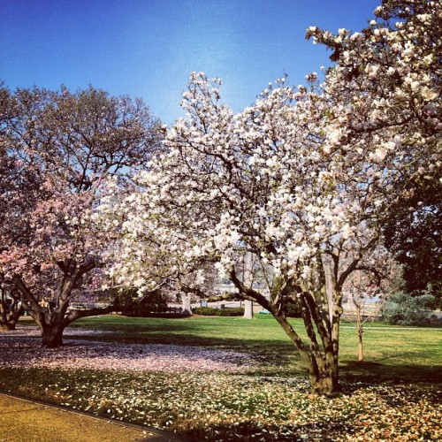 Spring sprang sprung.  (Taken with instagram)