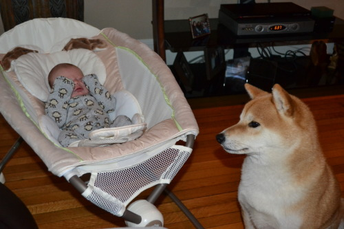 kenji meets his new brother!