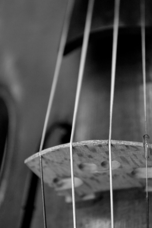 darozz:  Up close and stringed.