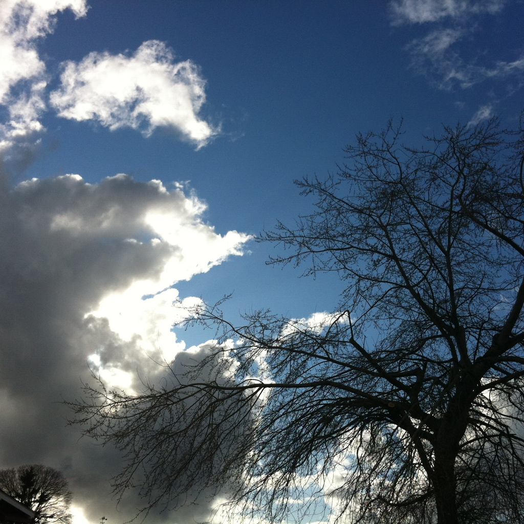 Tree and Sky #6x6 © Kent Kangley 2012
