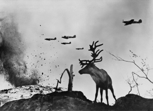 vietnamization:  A Deer onlooks adjacent to Soviet bombers over Seelow, Germany 1945.