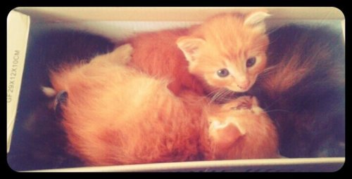 A box of #kittens #cats #cat #cute #love(from @FedyaKakDela on Streamzoo)