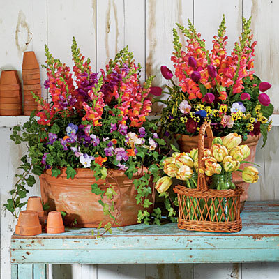 Snapdragons, Penny Violas, Tulips, Parsley and Ivy from Southernliving